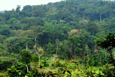 Forests Monitoring in the Congo Basin